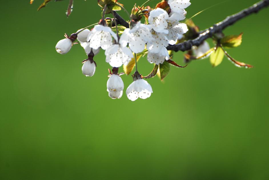 もう春ですね〜〜♪