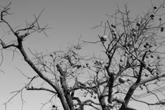秋の終わり_1