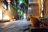 Watchcat of the alley