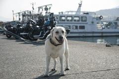 ハーレーダビッドソンと犬…
