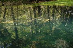 秋の終りの丸池様-2