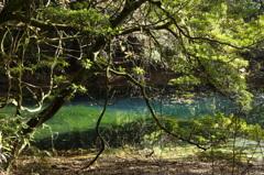 秋の終りの丸池様-4