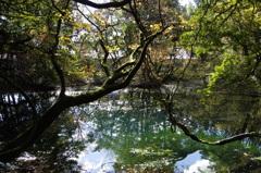 秋の終りの丸池様-3