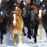 Horse exercise in winter