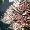 春の陽射し:PANA 100-300mm
