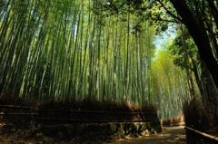 竹の秋 竹林の道 ~嵯峨野~