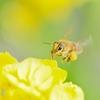 近所散策 ~ミツバチの春仕事~