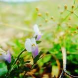 Flower besides rice field