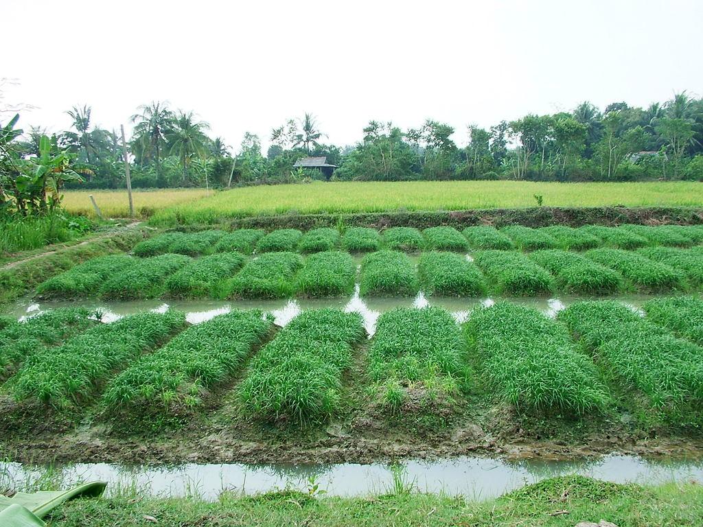 水路が走る野菜畑