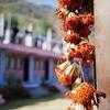Wish dried-flowers