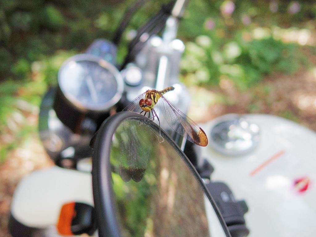 Dragonfly on HONDA CB223S