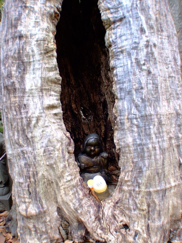 古い樹のうろに鎮座しています