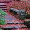 Autumn leaves on stone steps