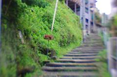Alley steps (Lensbaby)