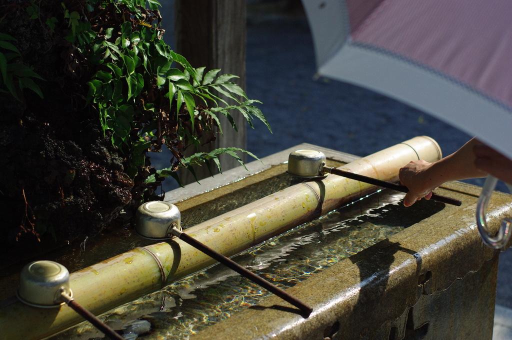 暑い日に手水舎の涼を求めて