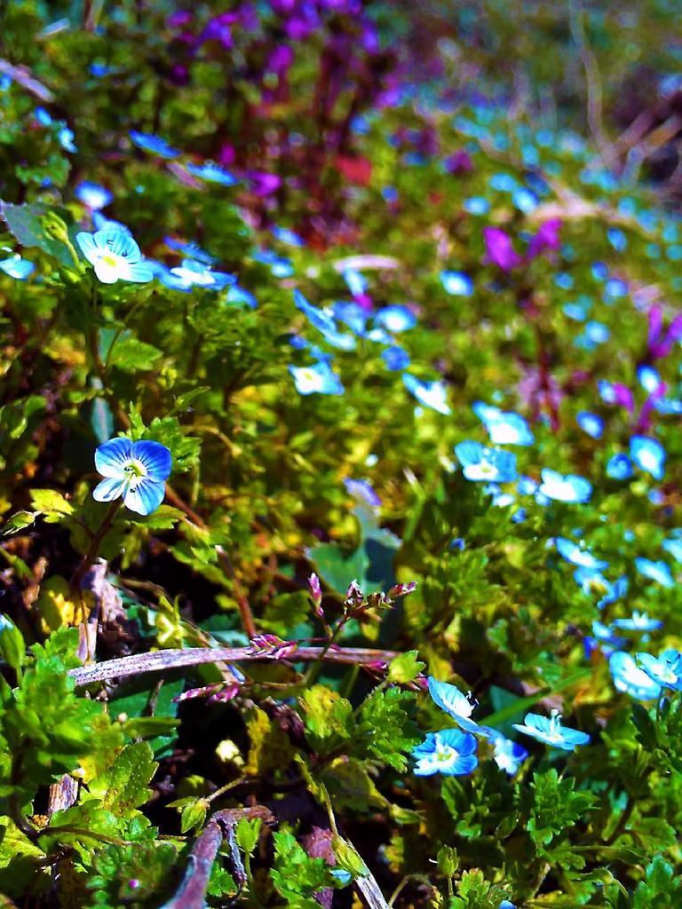 春の気配3(畦草)