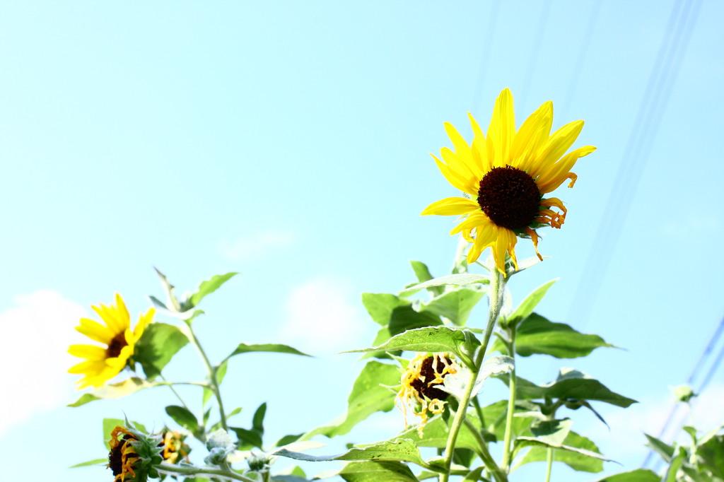 夏にありがとう