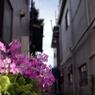 SONY DSLR-A200で撮影した風景(裏路地で)の写真(画像)