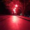 ベンチと夜桜
