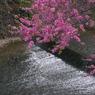 SONY DSLR-A200で撮影した風景(川辺のピンク)の写真(画像)