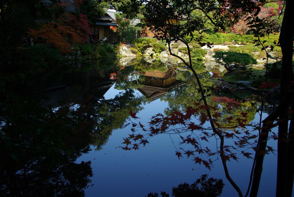 水面の庭園