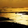 CANON Canon EOS Kiss X2で撮影した風景(プラントと海)の写真(画像)