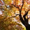 箸蔵山の秋