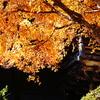 箸蔵寺・秋2009