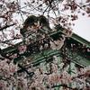 桜モダニズム