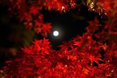真っ赤な中の月