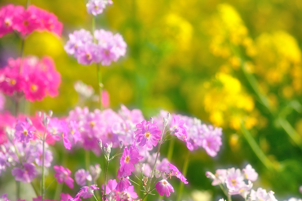 ランランな春