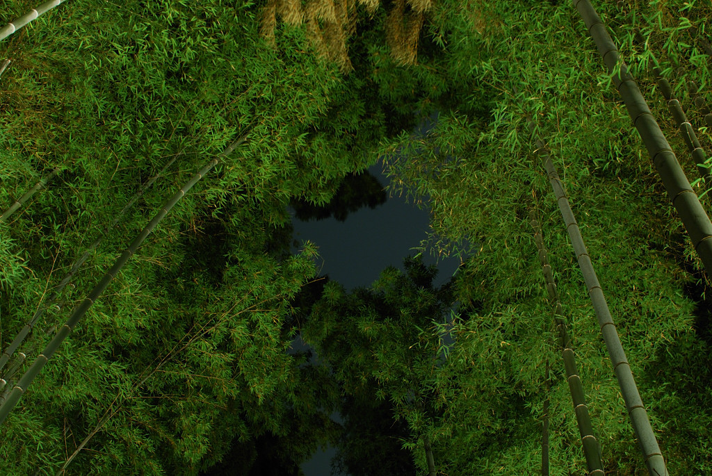 竹林を見上げて