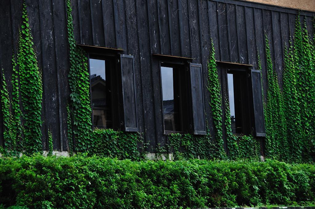 緑に覆われた家