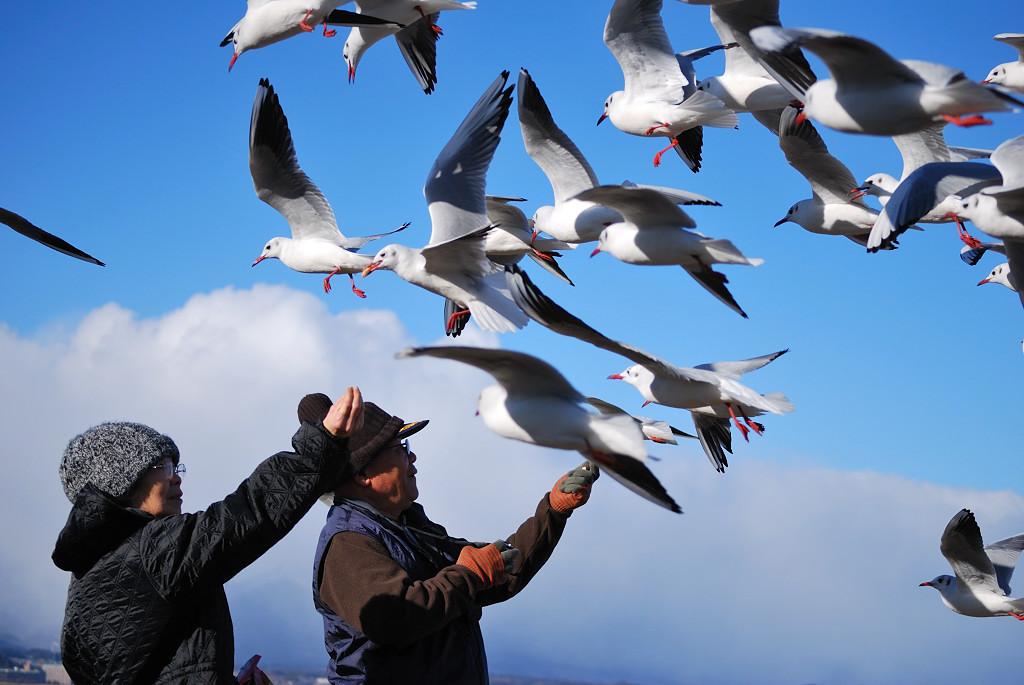 鳥の狙いは・・・。