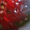 真っ赤なクリスマスツリー