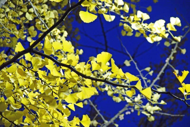 夜空に浮かぶ黄