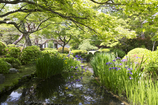 霞中庵のお庭