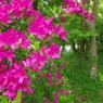 PENTAX PENTAX K-mで撮影した植物(金鱗湖の花)の写真(画像)