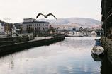 運河にカモメ