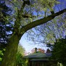 PENTAX PENTAX K-mで撮影した風景(旧永山邸の夜桜)の写真(画像)