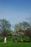 桜で記念写真