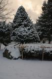 雪の合間の夕日