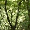 若草山b_ZD1435f2_0198_20080506