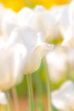 白く優しく柔らかく・・・
