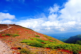 大雪山 黒岳の紅葉