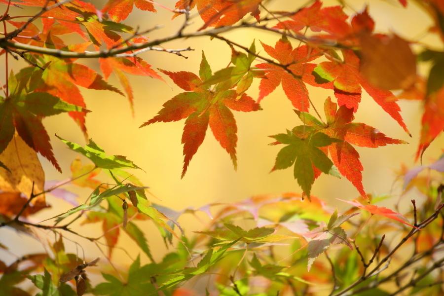 秋ですね!!