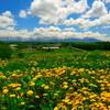 タンポポの丘