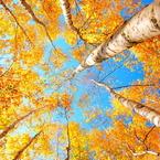 NIKON NIKON D40で撮影した風景(空を見上げて…)の写真(画像)