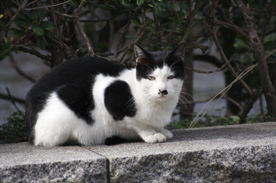 目つき悪いネコ