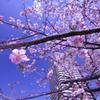Sunshine and bloom